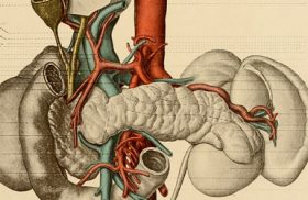 An anatomical guide to making your college decision