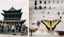 Photos of students jumping in front of X'ian City Wall and pinned insects