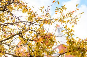 A Thanksgiving message from Interim President Williams