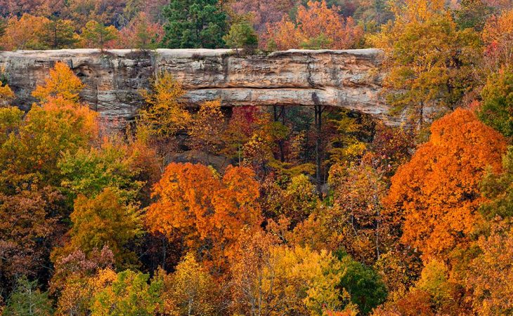 natural bridge and trees