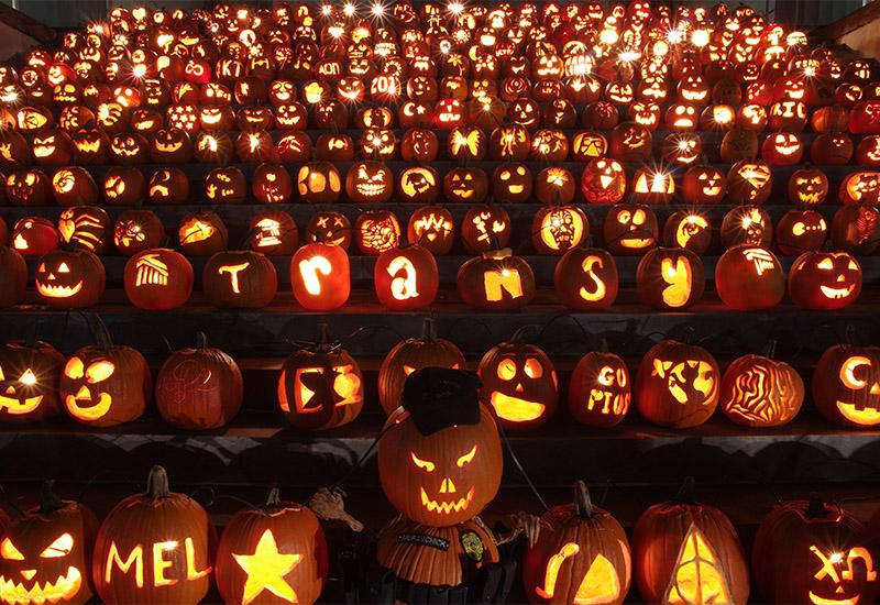 Pumpkinmania Pumpkins